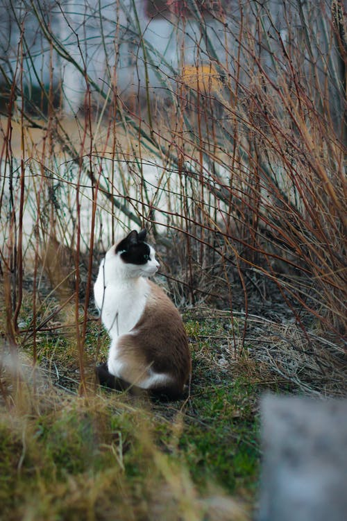 Brown and White Cat Near Dried Plants