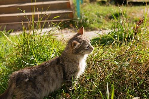 Foto stok gratis binatang, kucing