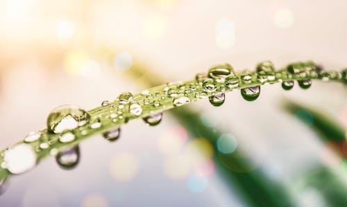H2O, フォーカス, 成長, 水の無料の写真素材
