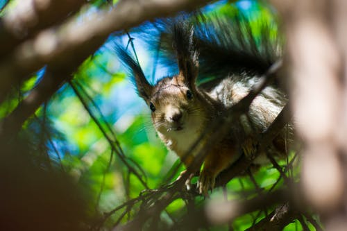 Shallow Focus Photography of Brown Squirrel
