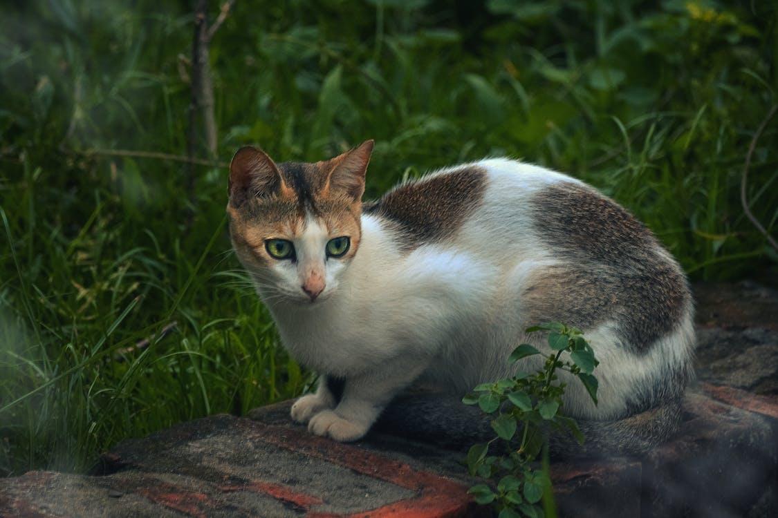adorable, animal, animal domèstic