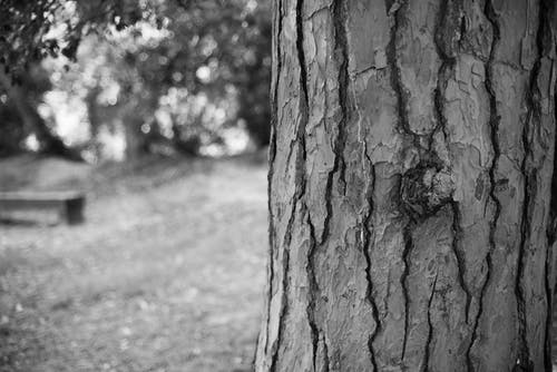 Základová fotografie zdarma na téma černobílá, movidagrafica, poleno, přírodní park