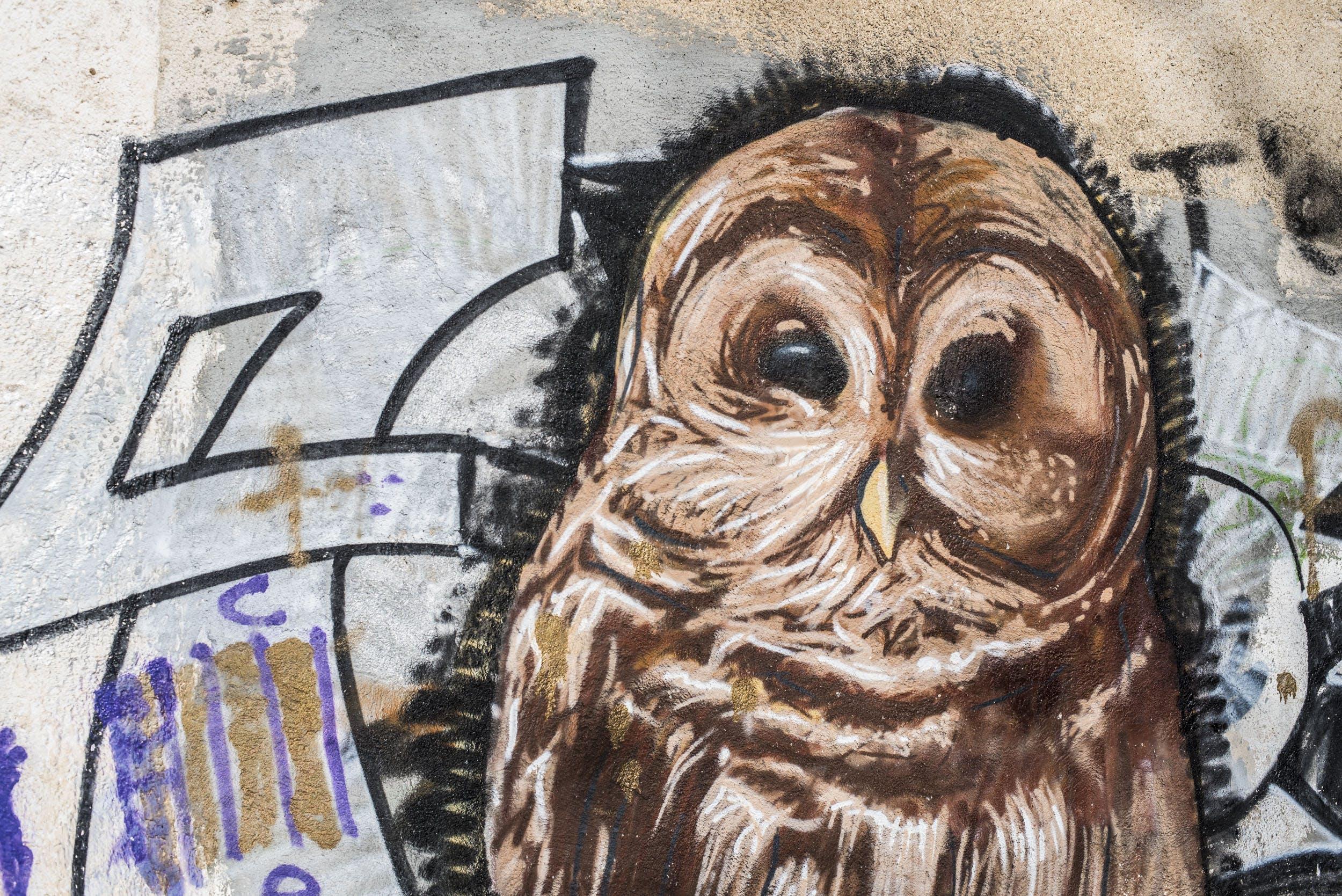 Fotobanka sbezplatnými fotkami na tému graffiti, movidagrafica, sova, stena