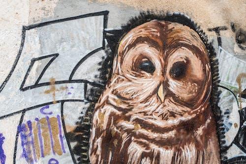 Kostenloses Stock Foto zu eule, graffiti, mauer, movidagrafica