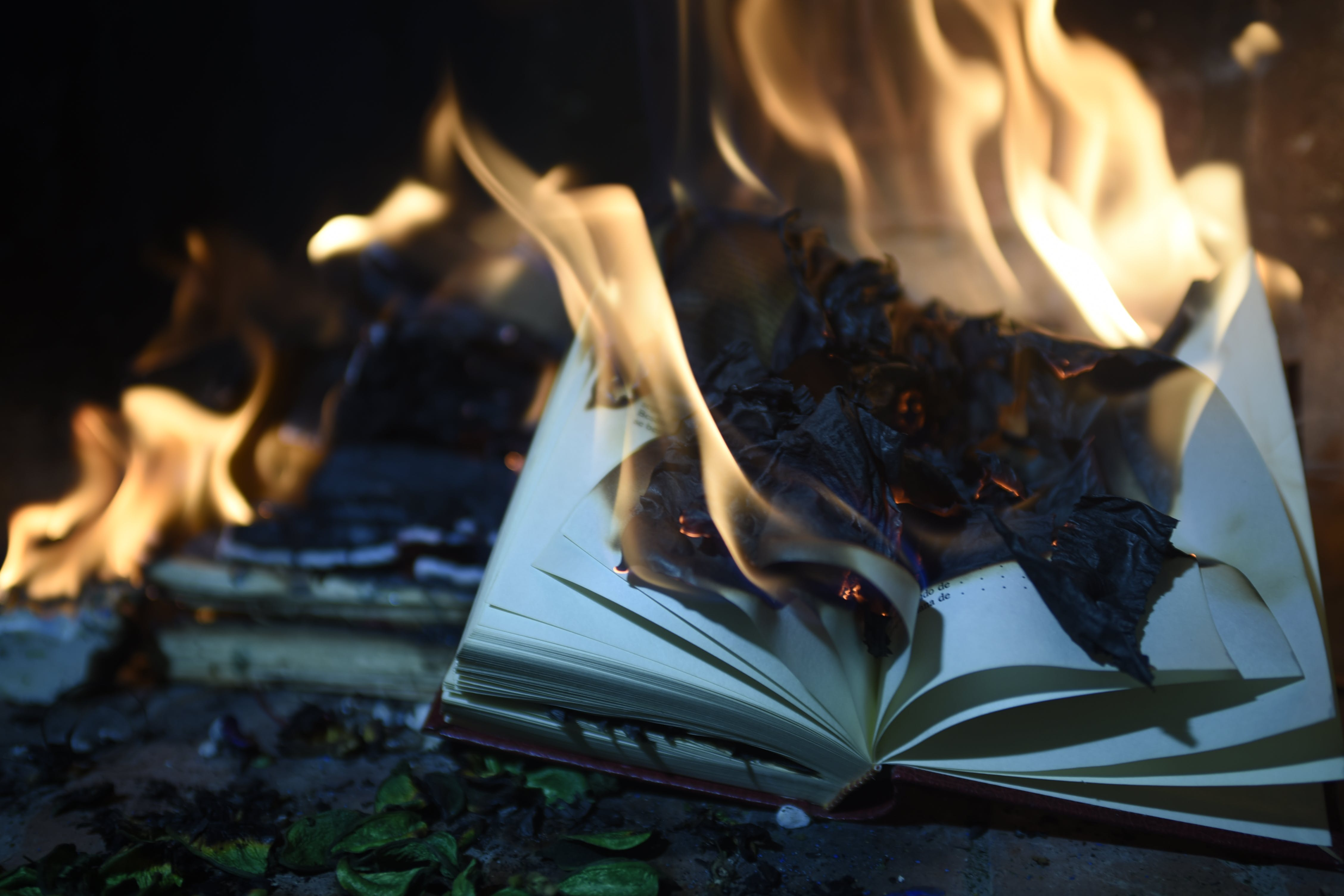 Free stock photo of bonfire, book, burning, fire