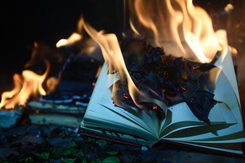 Základová fotografie zdarma na téma hoření, movidagrafica, oheň, plameny