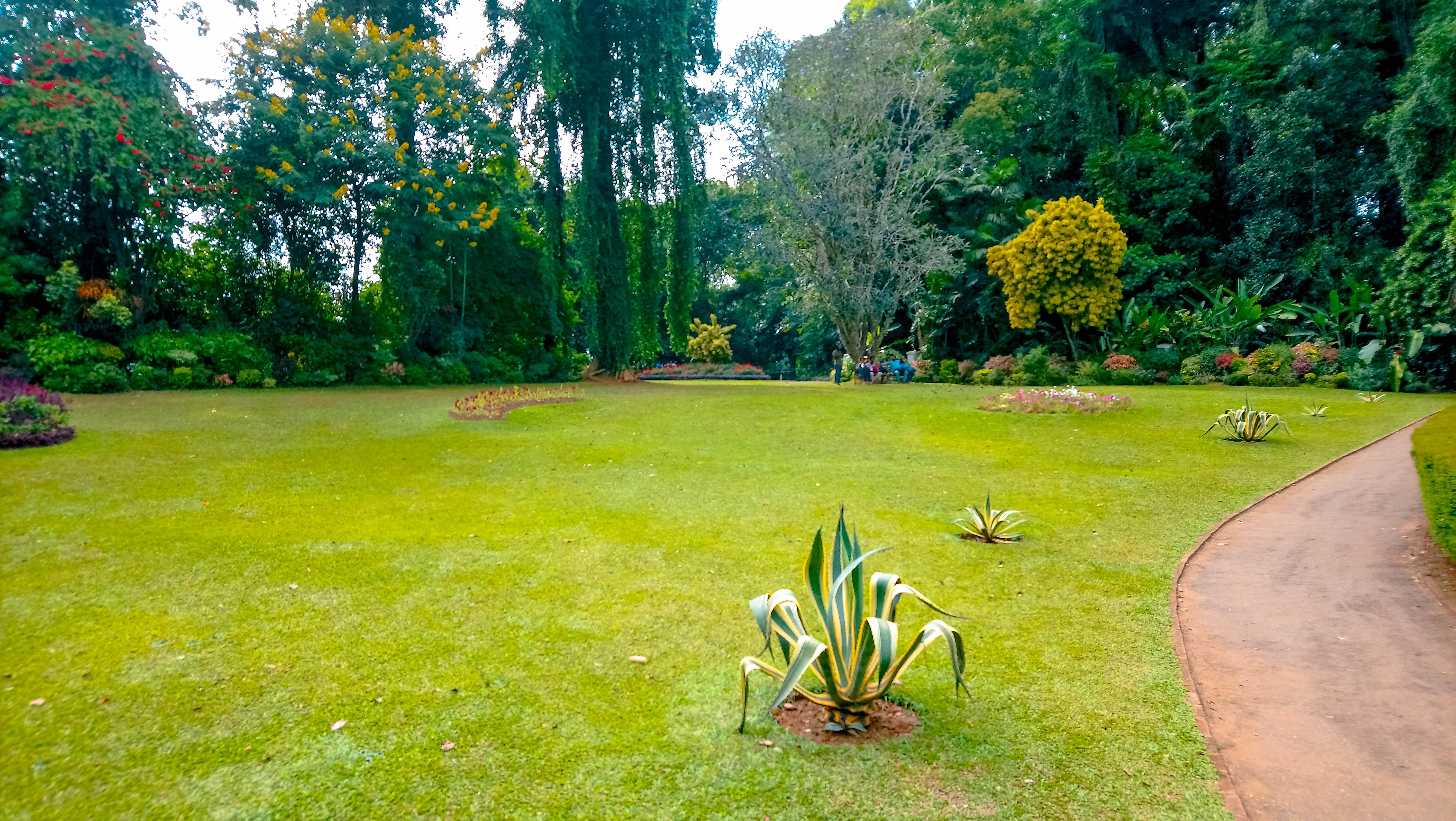 Gras In Tuin : Gras in je tuin waar op letten