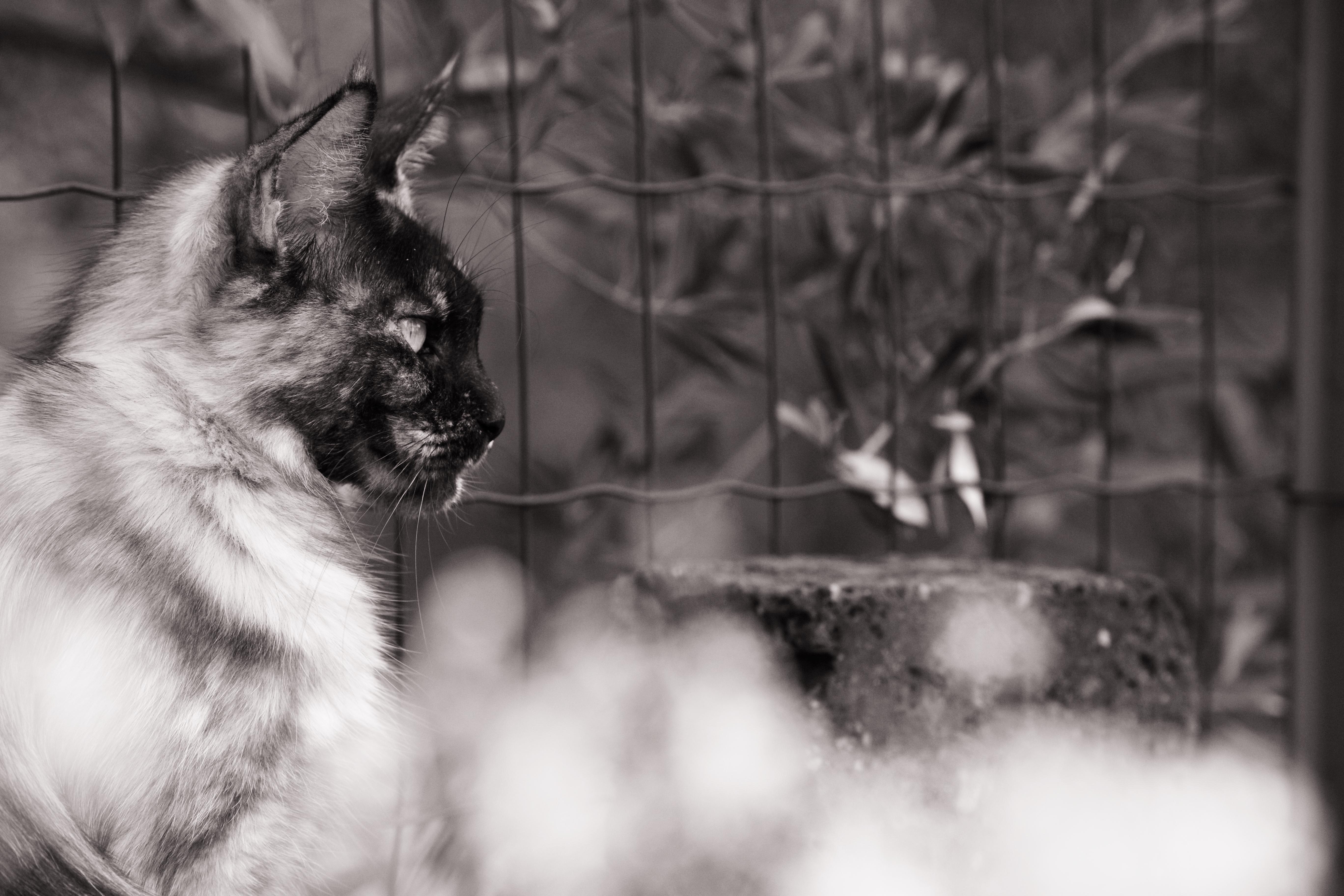 Biely chlap jej čierna mačička