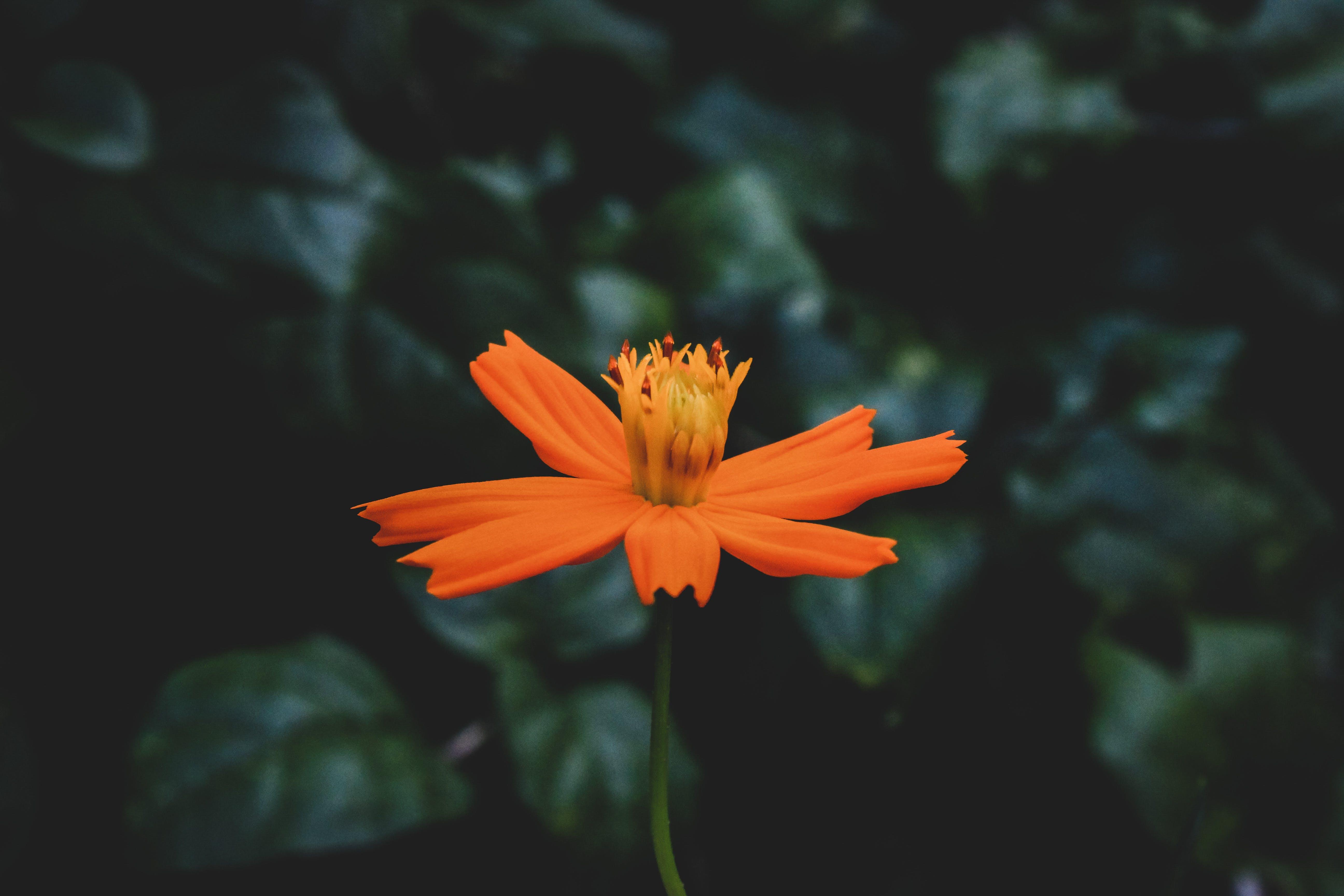 Close-Up Photo of Orange Flower