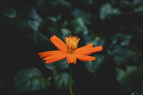 Close-Up Photo of Orange Flower