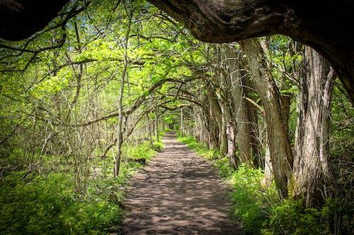 Imagine de stoc gratuită din natură, parc