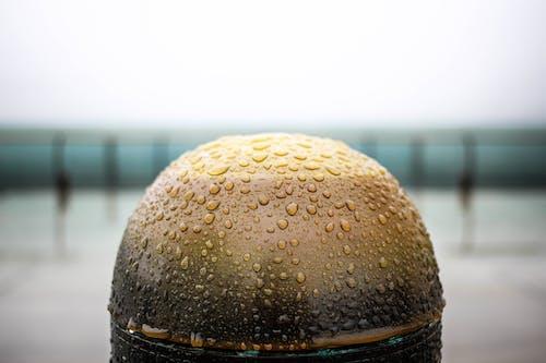Darmowe zdjęcie z galerii z deszcz, krople deszczu, po deszczu, wczesny ranek