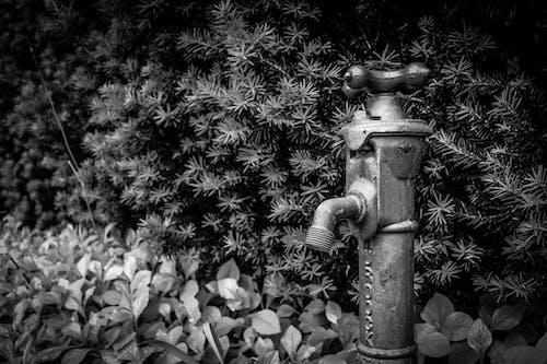 Imagine de stoc gratuită din apă, centrale