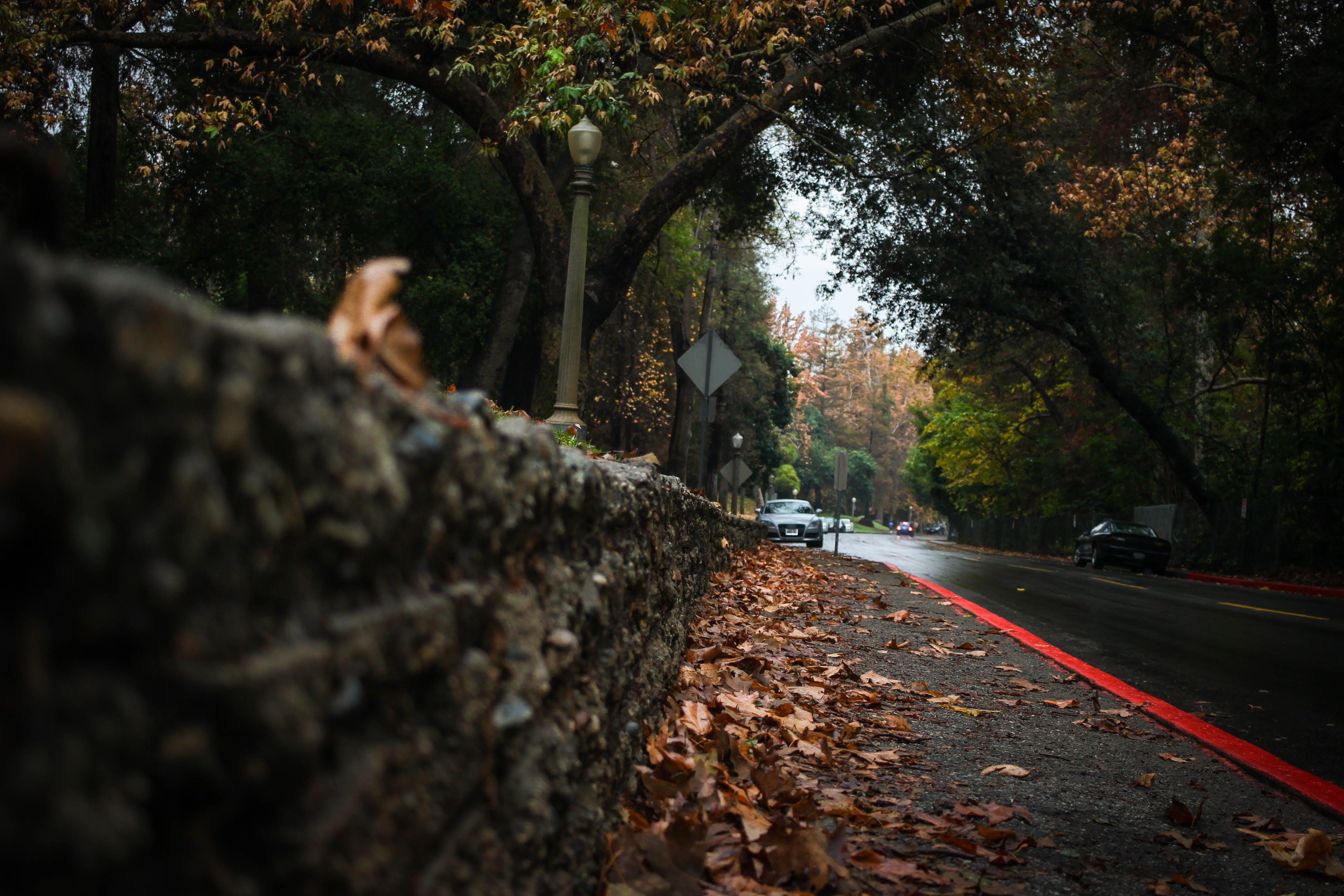 Foto d'estoc gratuïta de arbres, bosc, boscos, carrer