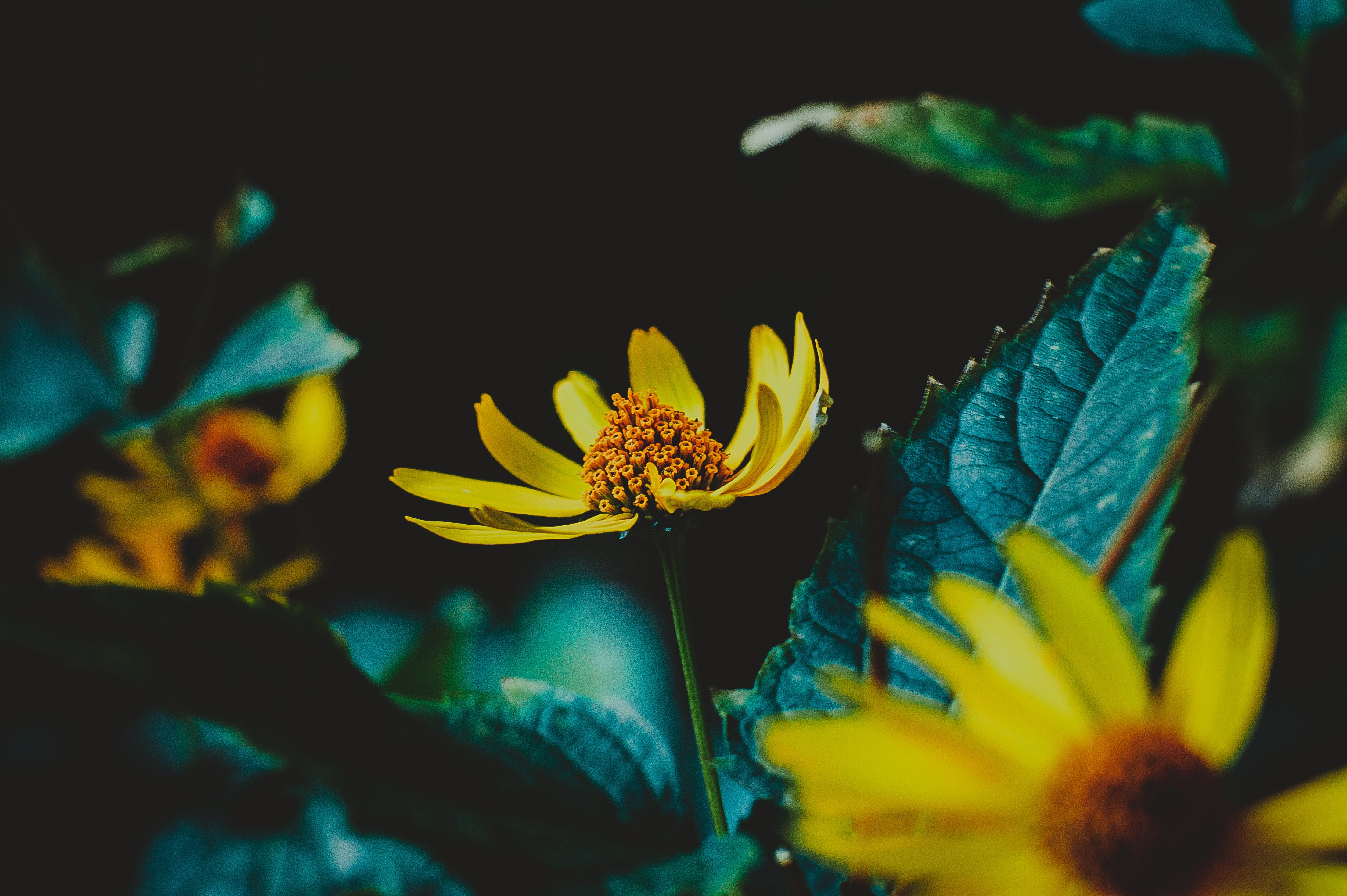 Selective Photography of Yellow Flower