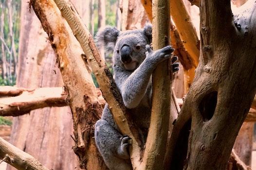 Free stock photo of tree, zoo, koala, leipzig