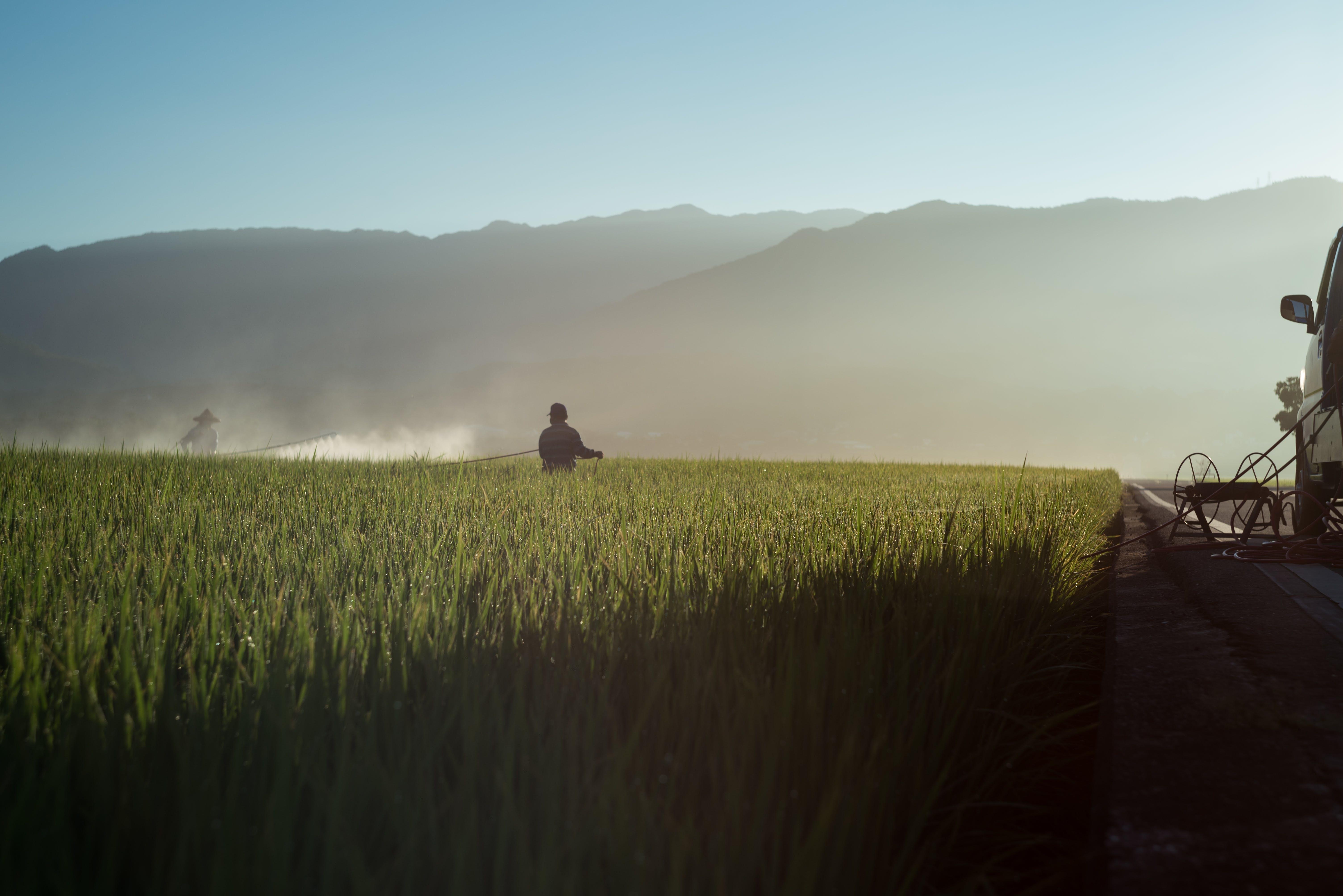Foto d'estoc gratuïta de agricultor, blat, camp, camp de blat
