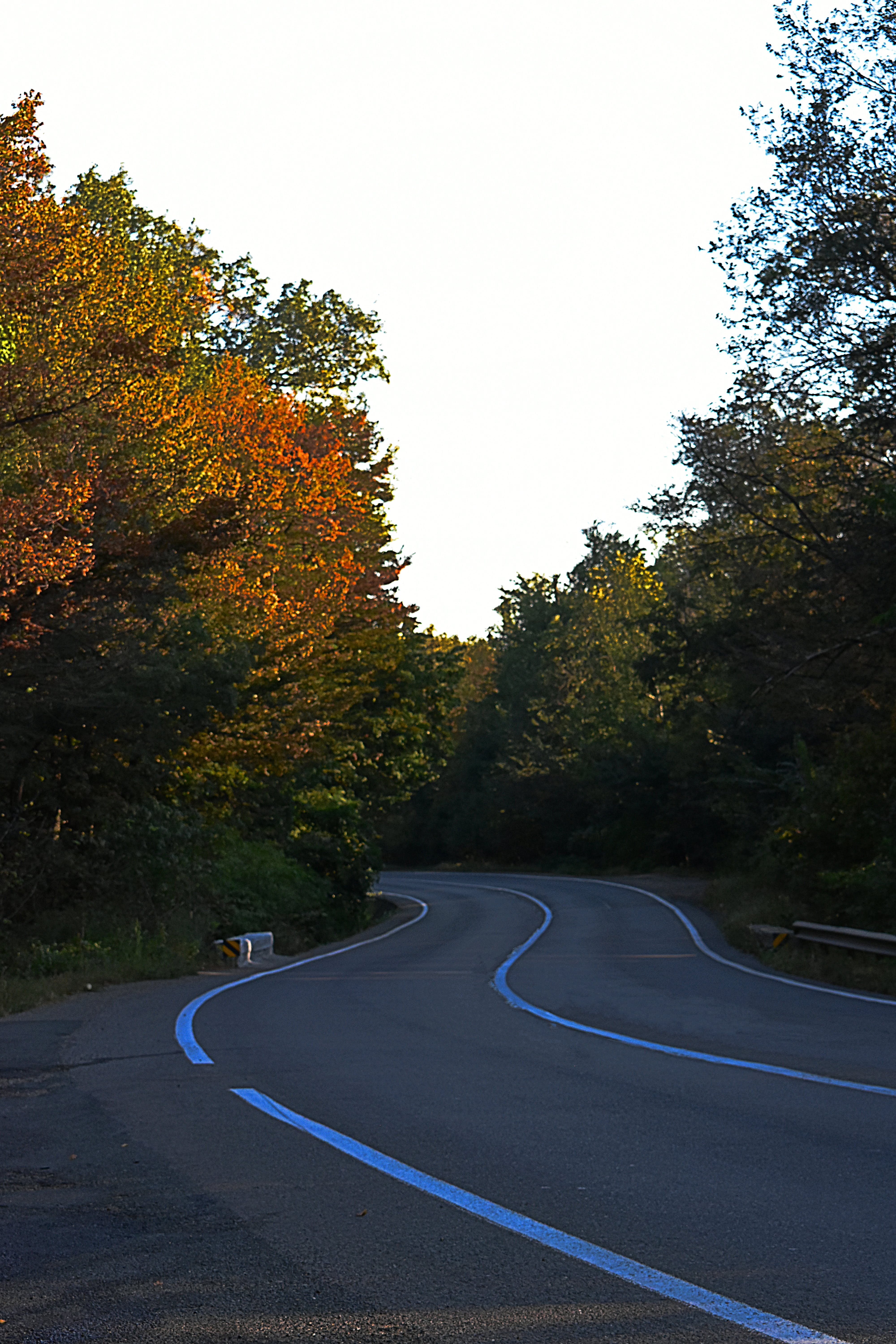 Road Between of Green Leafed Trees during Dayimer