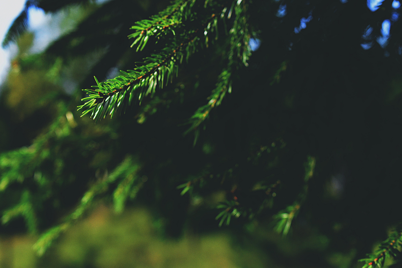 Foto profissional grátis de árvore, aumento, brilhante, close