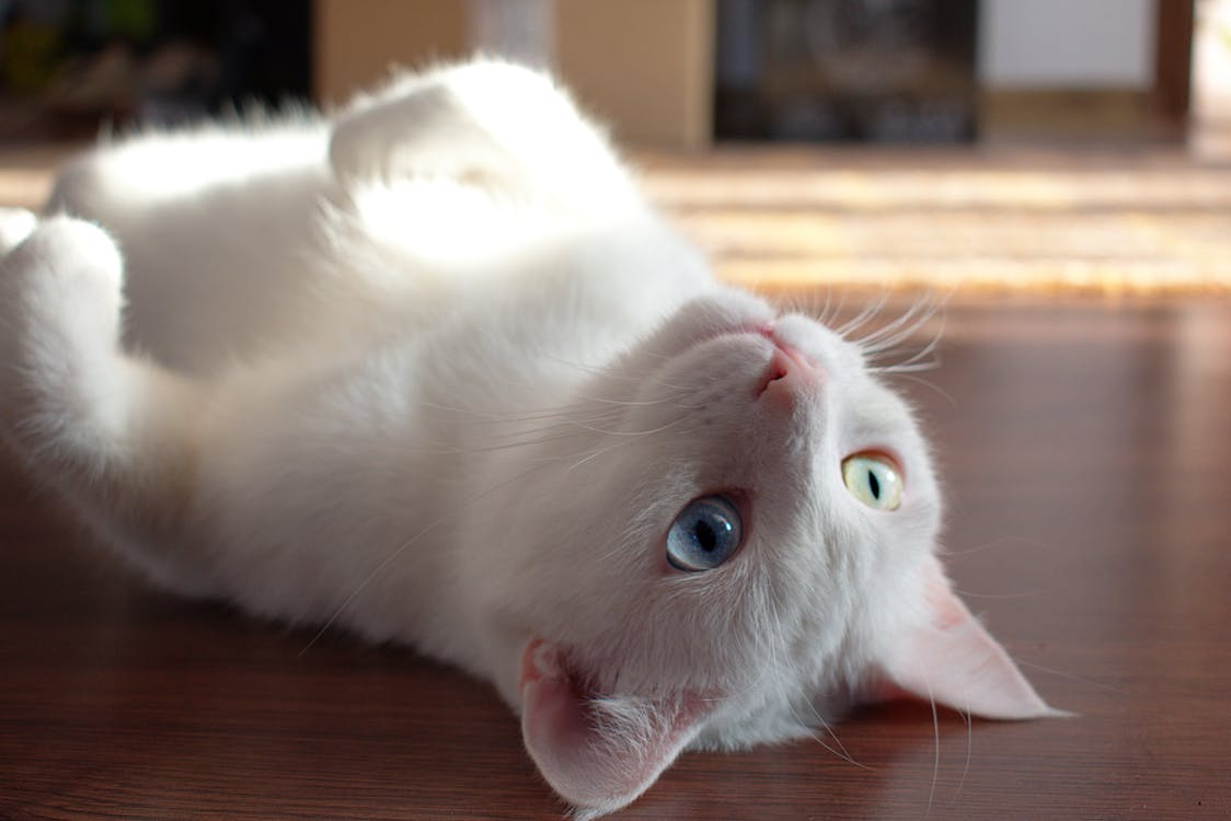 Close-Up Photo of Kitty Laying On Floor