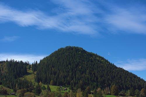Gratis arkivbilde med 4k-bakgrunnsbilde, ås, bartrær, blå himmel