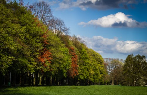 Green and Red Tress Under Blue Sky and White Clouds during Daytime