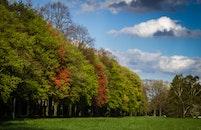 landscape, nature, trees