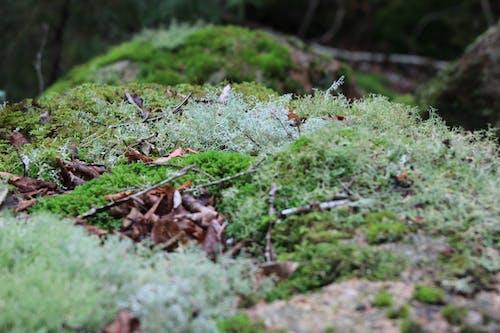 Free stock photo of green, ground, moss