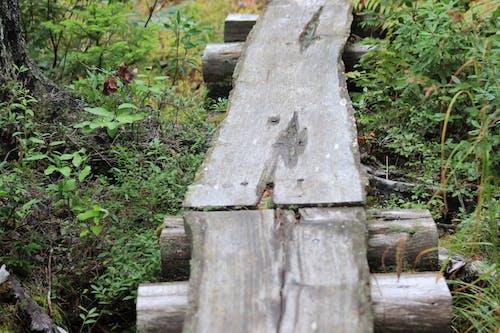 Free stock photo of bridge, footpath, walking