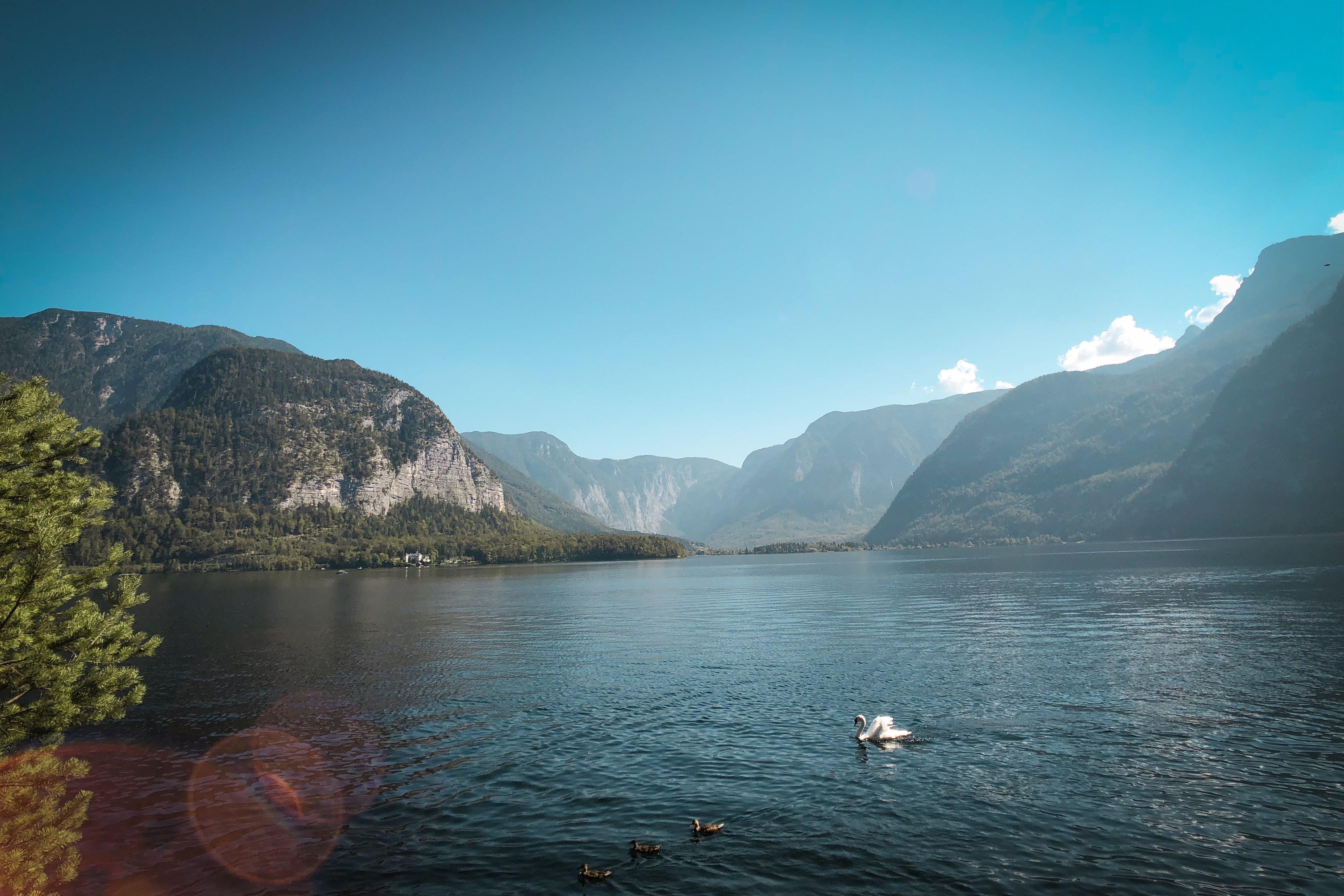 Základová fotografie zdarma na téma fjord, hora, kámen, krajina