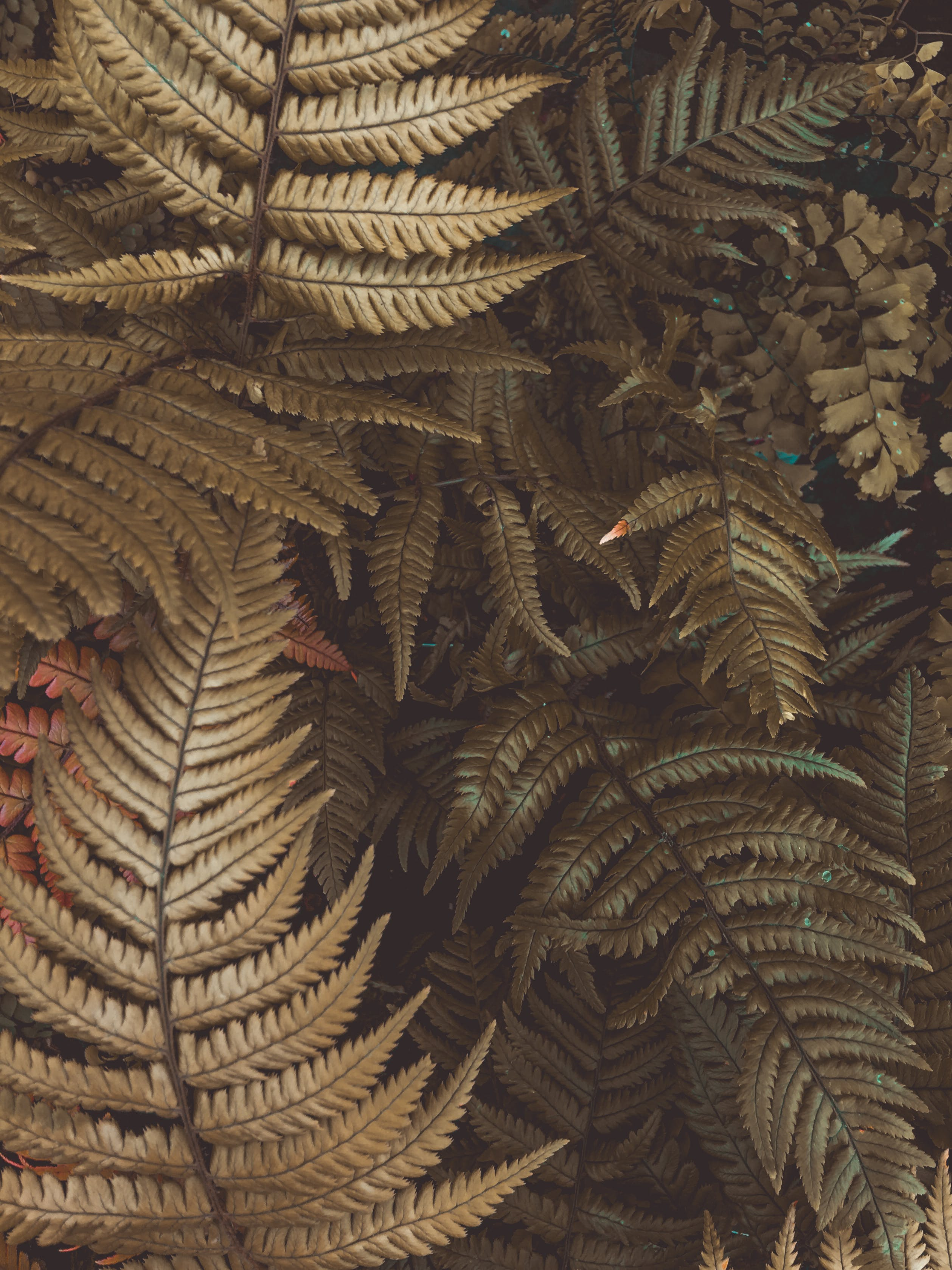 Photo of Fern Plants