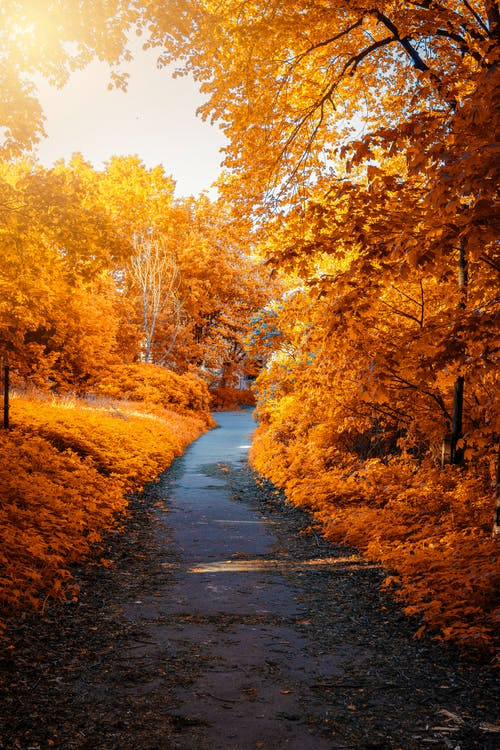 Photo of Path In-between Woods during Autumn