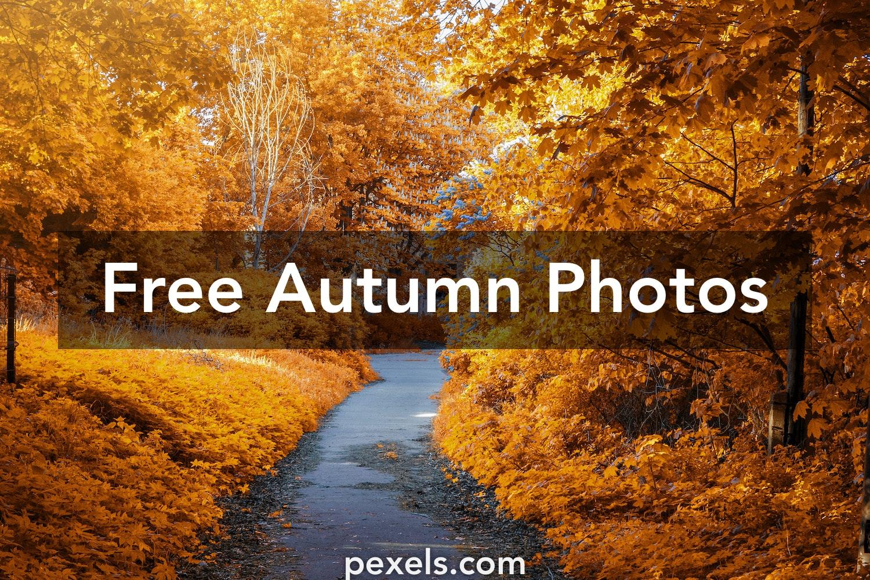 1000 Engaging Autumn Photos Pexels Free Stock Photos