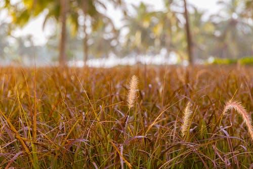 Gratis arkivbilde med åkre, gress, havkyst, kokospalmer