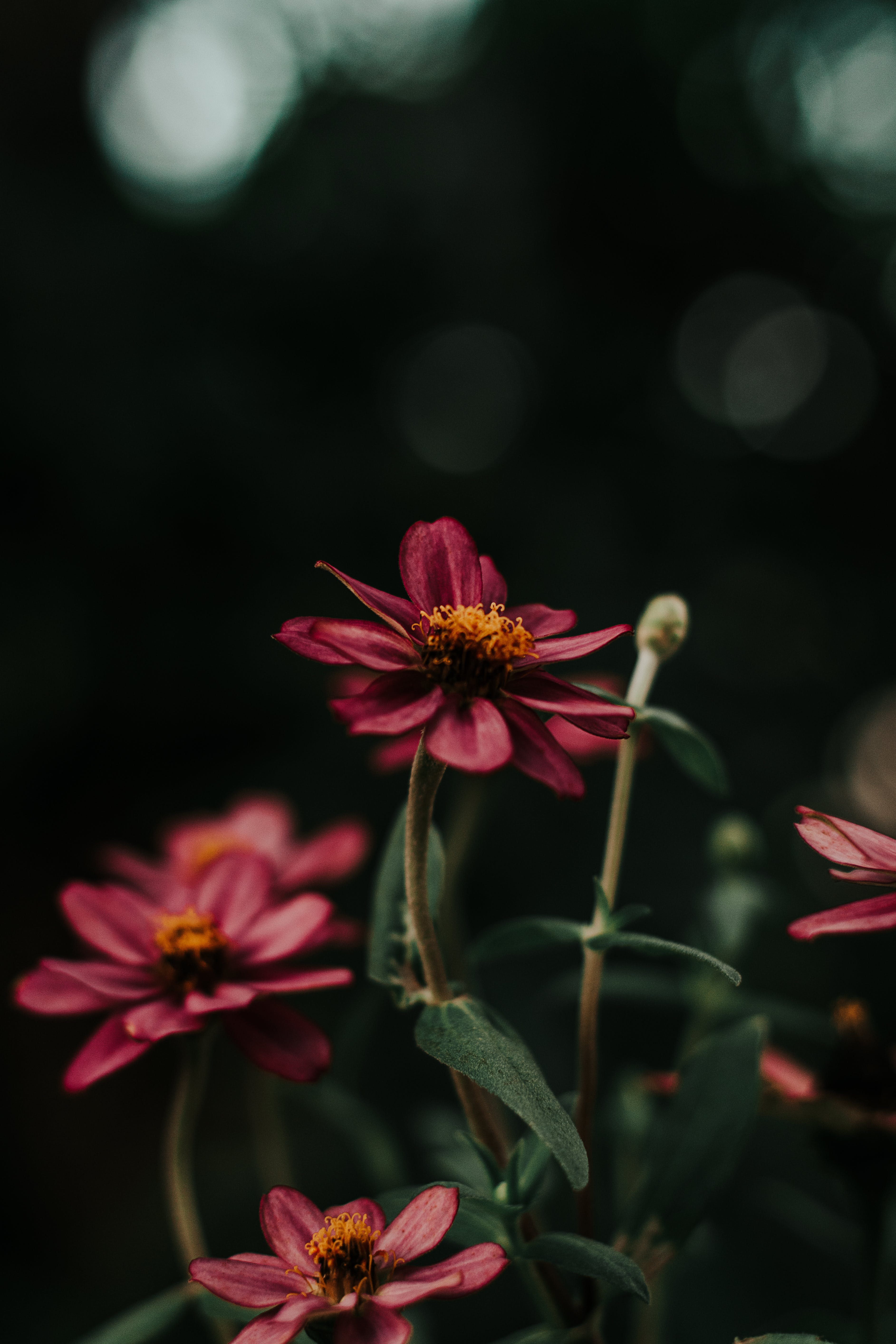 Close-Up Photo of Purple Flowers