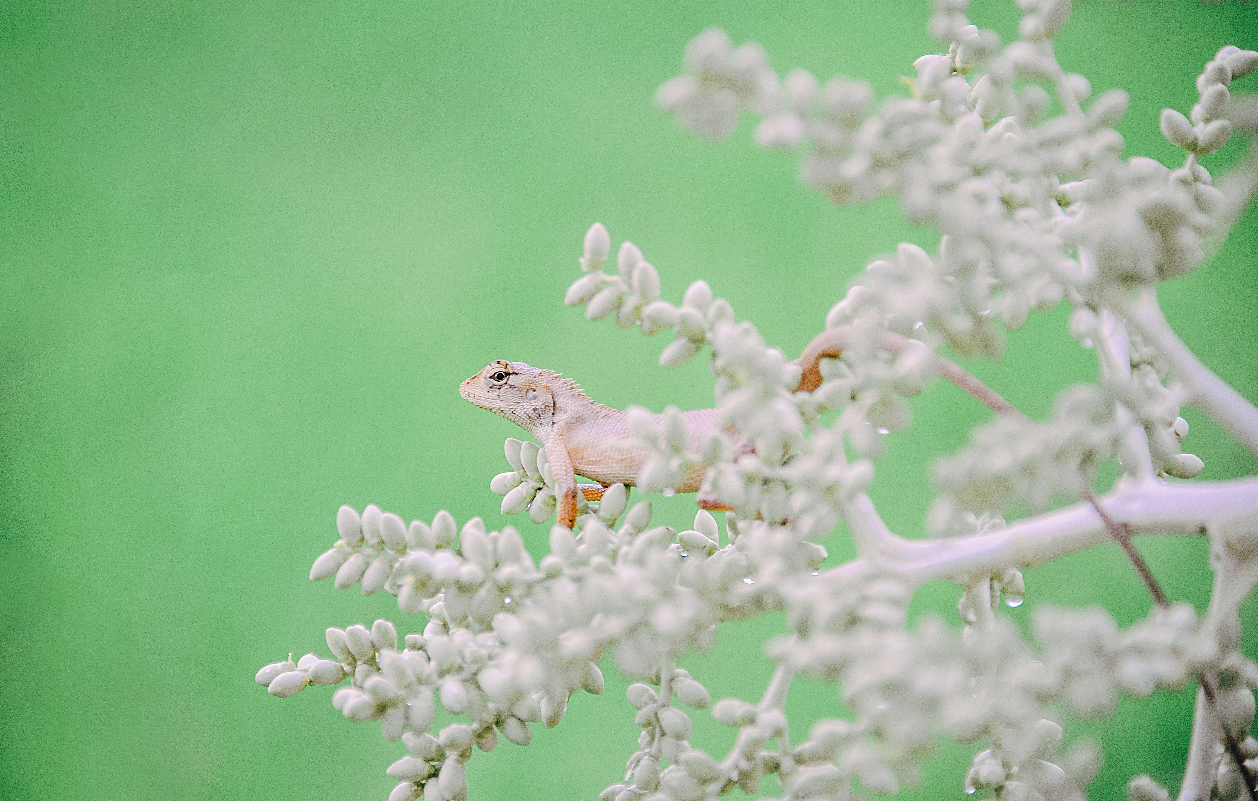 White Lizard On Plant