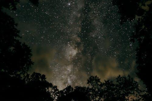 Foto profissional grátis de árvores, céu, céu noturno, estrelas