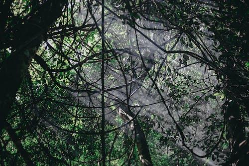 Foto profissional grátis de árvores, ecológico, feixe, floresta