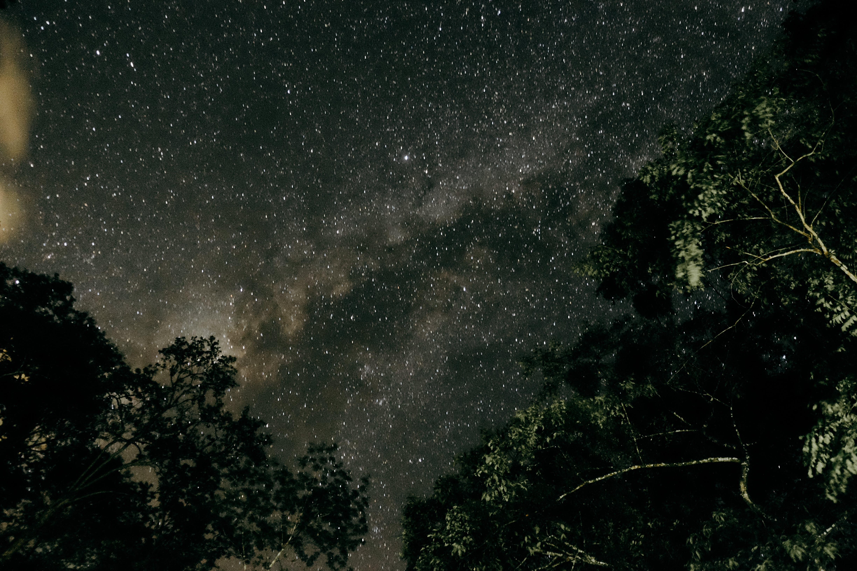 astronomie, bäume, galaxie
