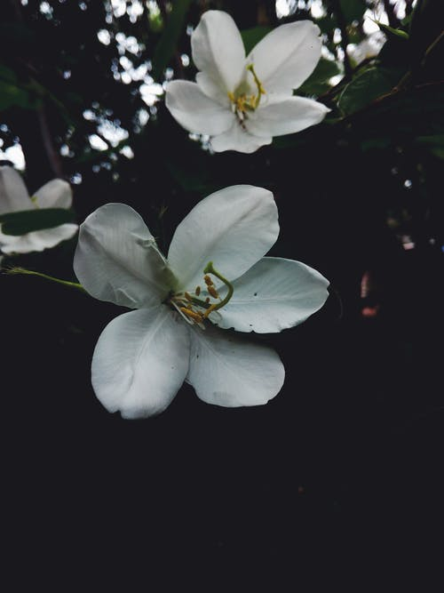 自然写真, 黒と白の愛の無料の写真素材