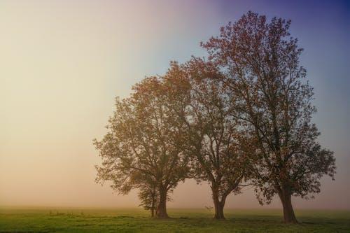 Foto d'estoc gratuïta de a l'aire lliure, alba, amb boira, arbres