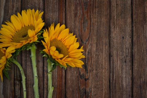 Three Sunflowers On Table