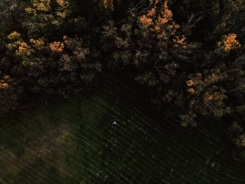 俯視圖, 天性, 景觀, 森林 的 免費圖庫相片