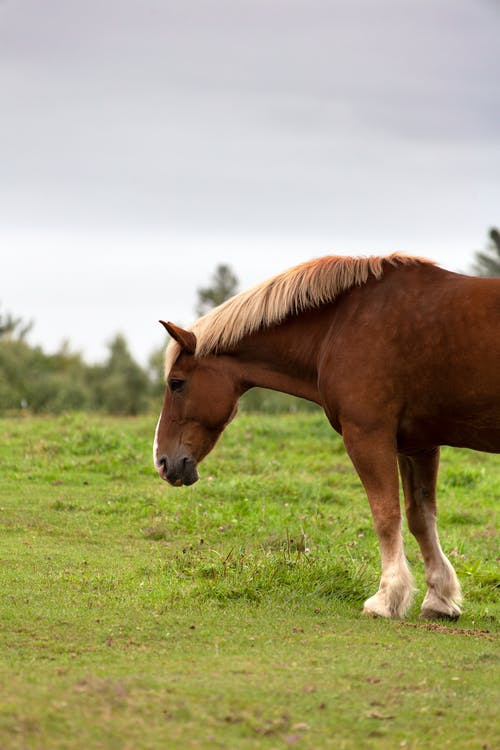 Photo of Horse On Grass Field