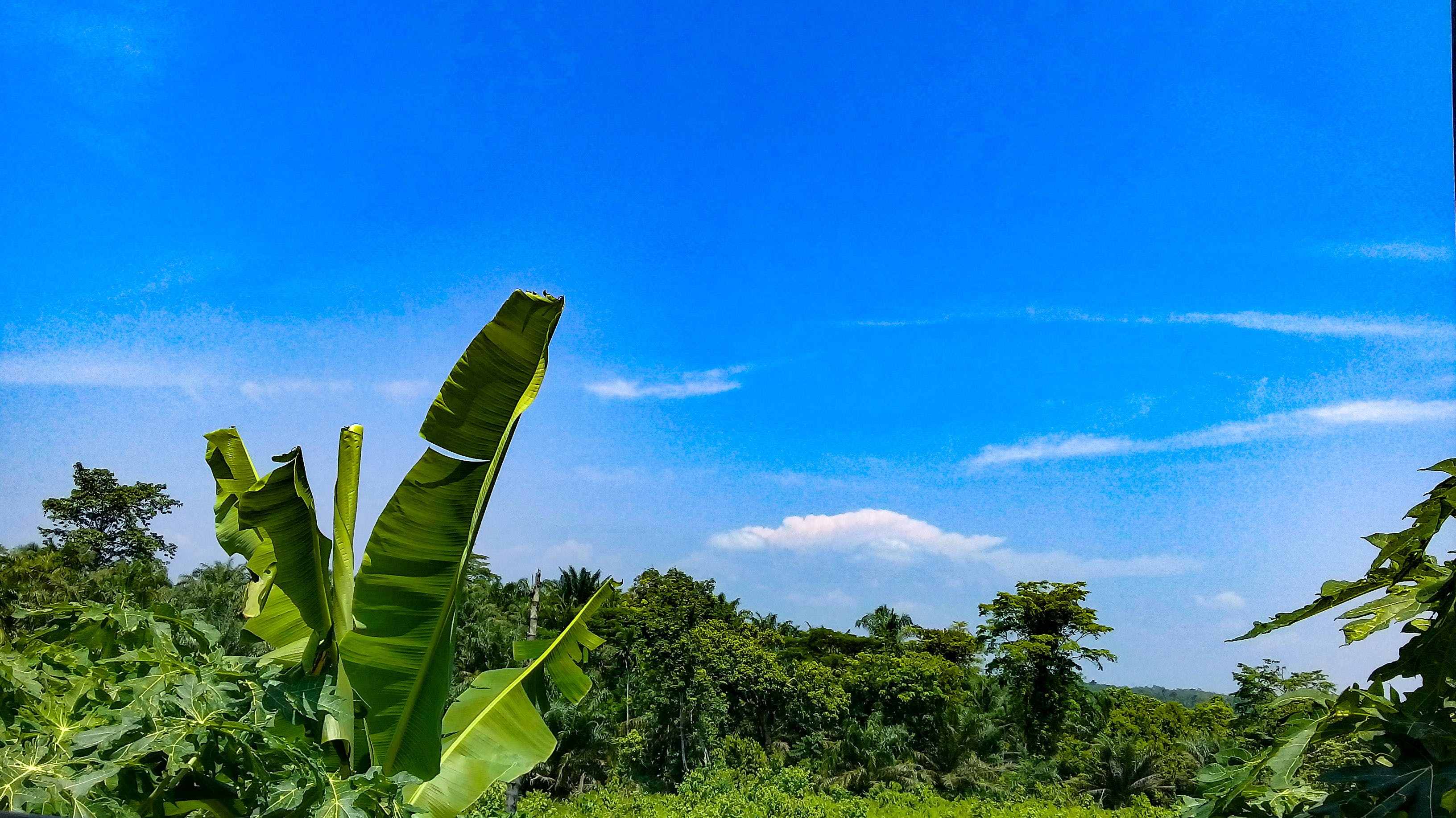 Free stock photo of blue skies, blue sky, green leaf, healthy lifestyle