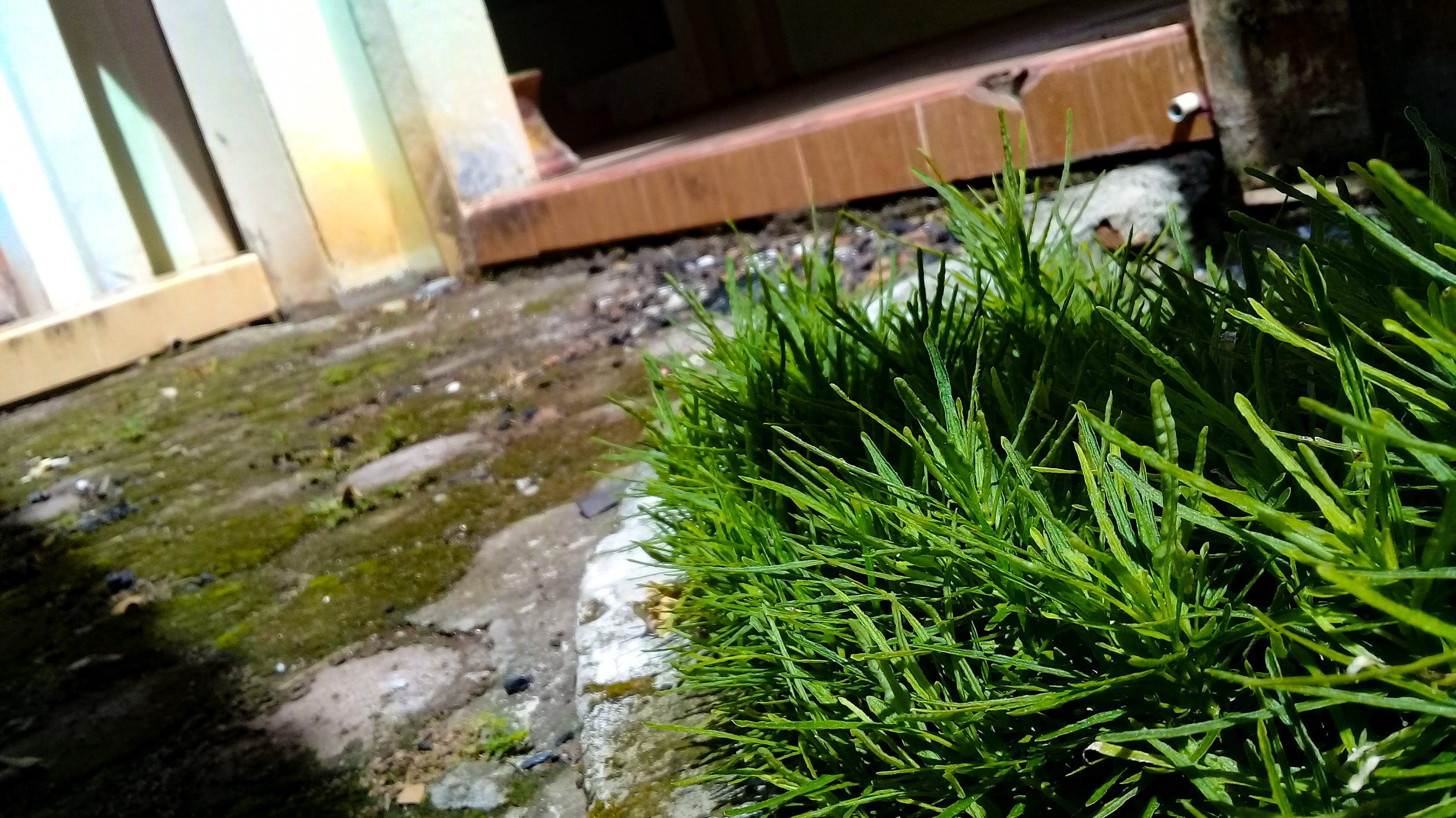 Free stock photo of blur, blurred background, grass, green grass