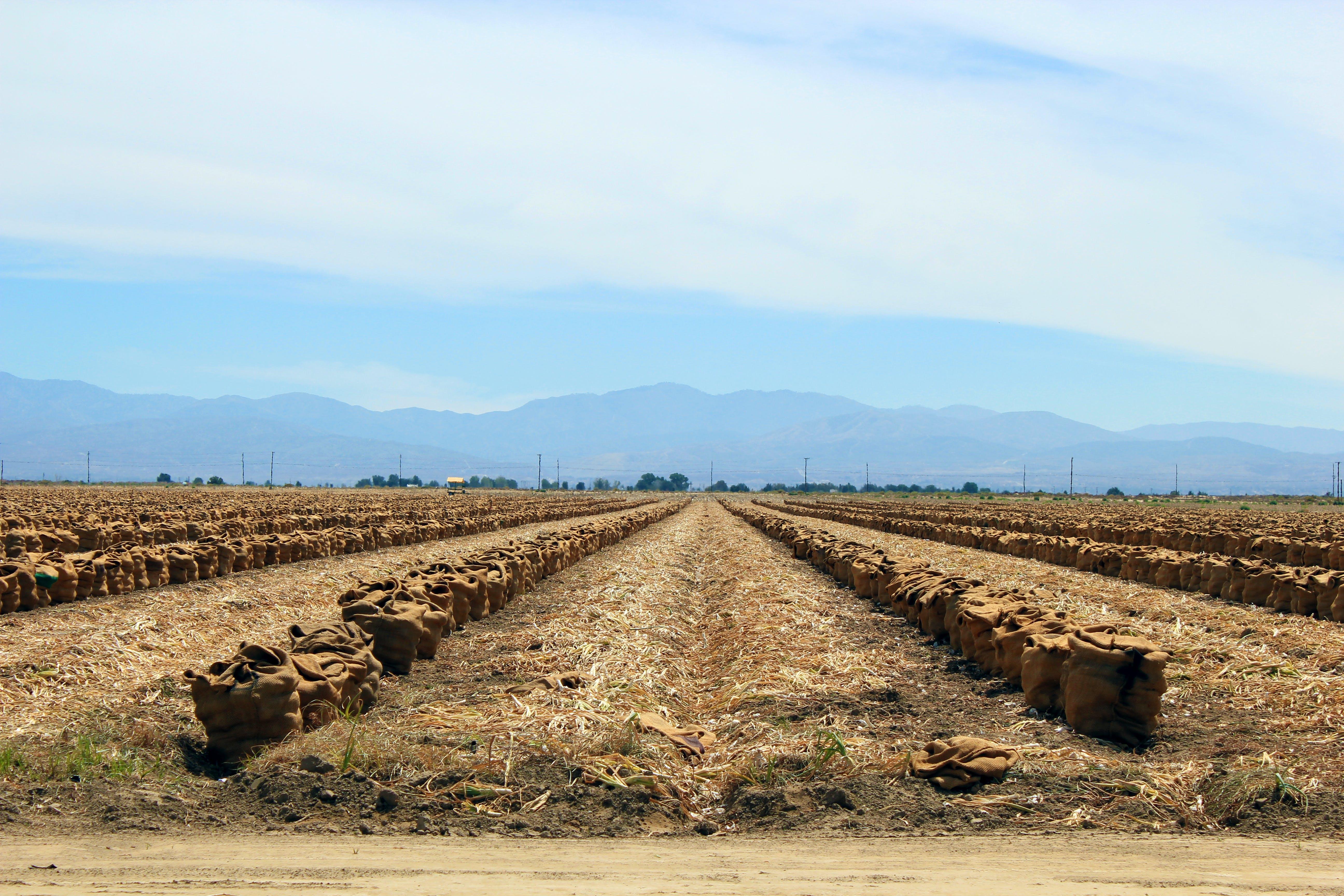 Free stock photo of harvest