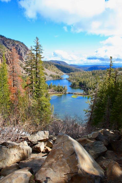 Imagine de stoc gratuită din apă, arbori, codru, fotografie cu natură