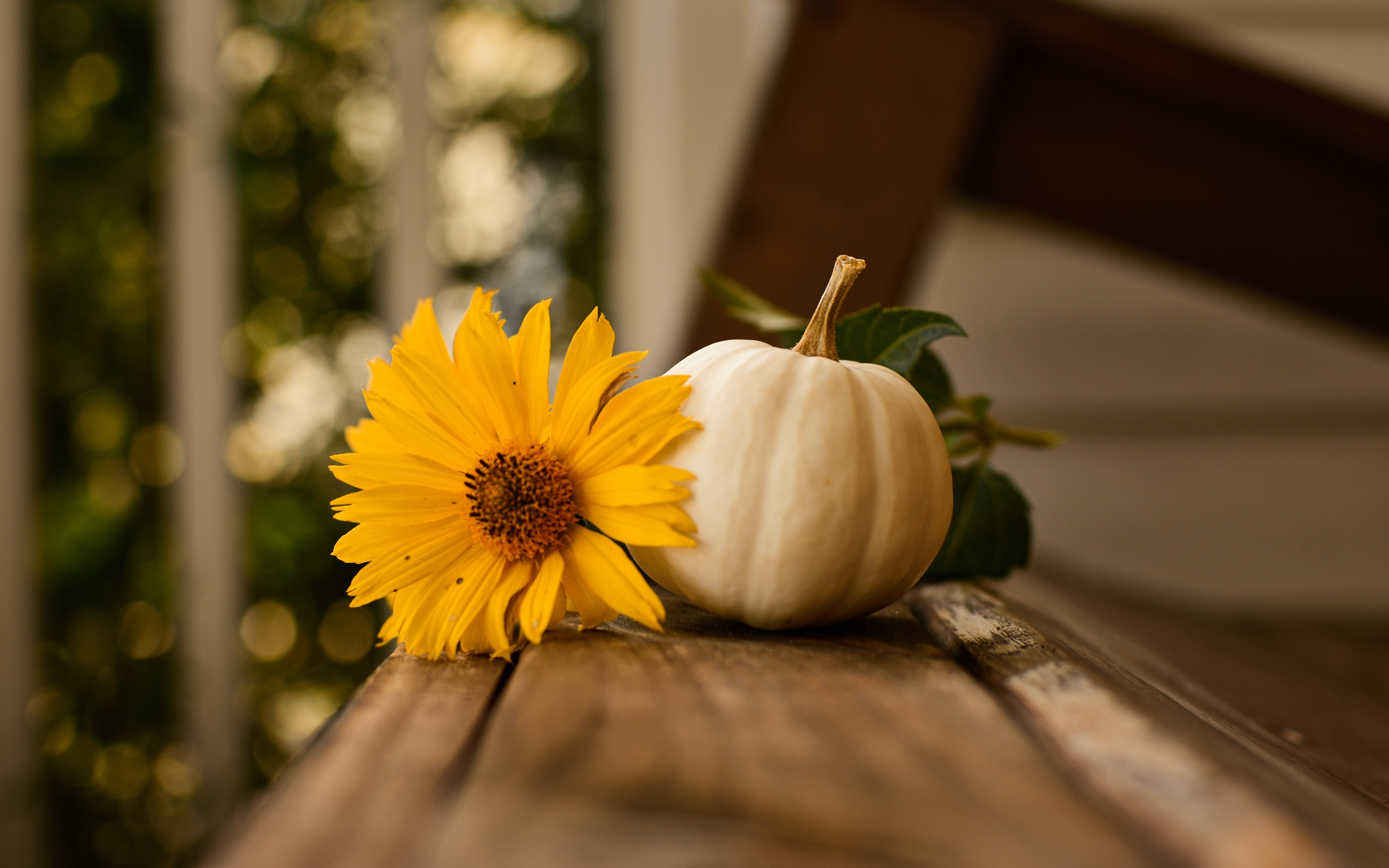 White Pumpkin And Yellow Flower o
