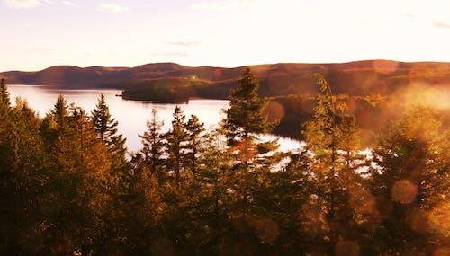 Gratis stockfoto met bergen, Bos, bossen, daglicht